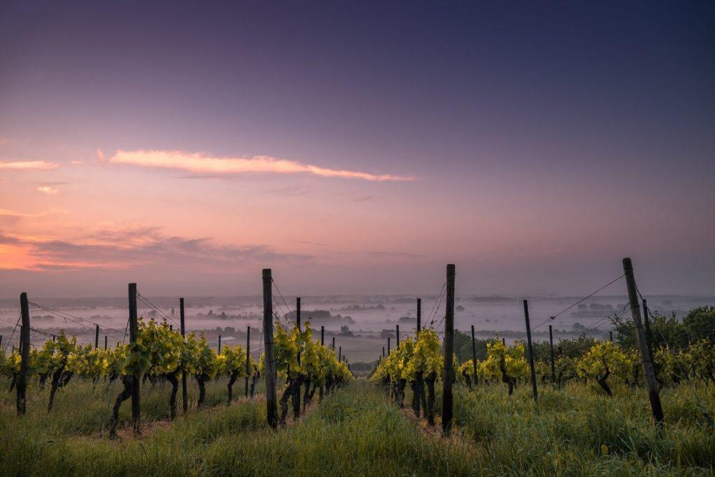 französische Weinberge im Morgengrauen