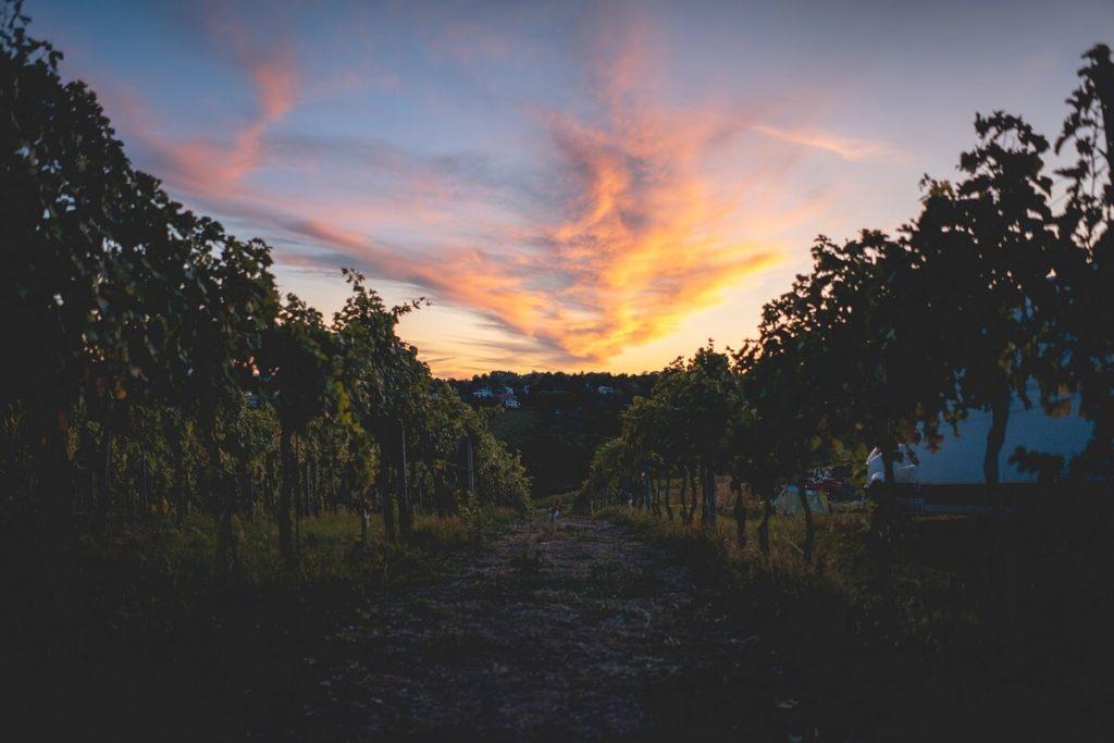 Stuttgarter Weinberge im Abendlicht